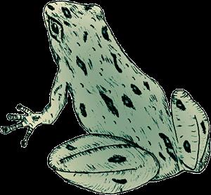 FrogLookingLeft