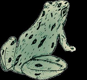 FrogLookingRight